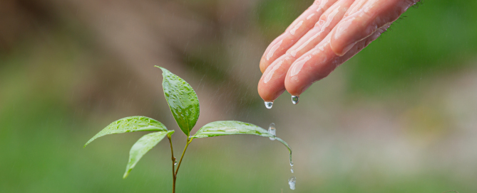 close up picture of hand watering the sapling of the plant